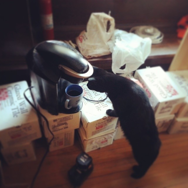 He loves coffee. #catsofinstagram